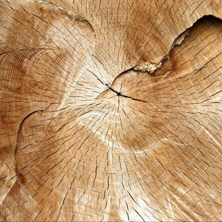 Massivholz, Baumstamm Hirnholz